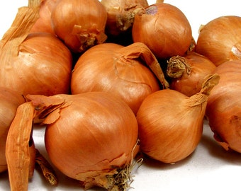 Red Shallots For Planting or Cooking Grown Organic Non-GMO Spring Shipping 1 Pound - Shipping Now!