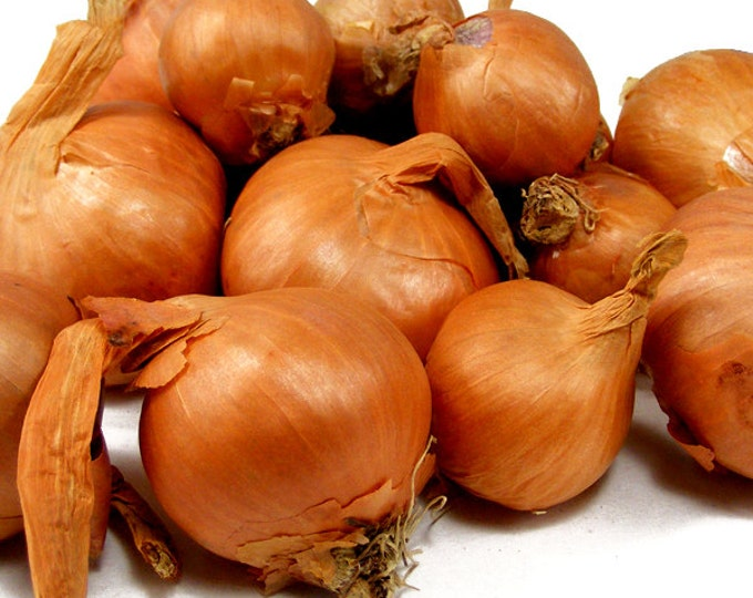 Red Shallots - 8 Ounces Grown Organic Non-GMO Spring Shipping For Planting or Cooking - Shipping Now!