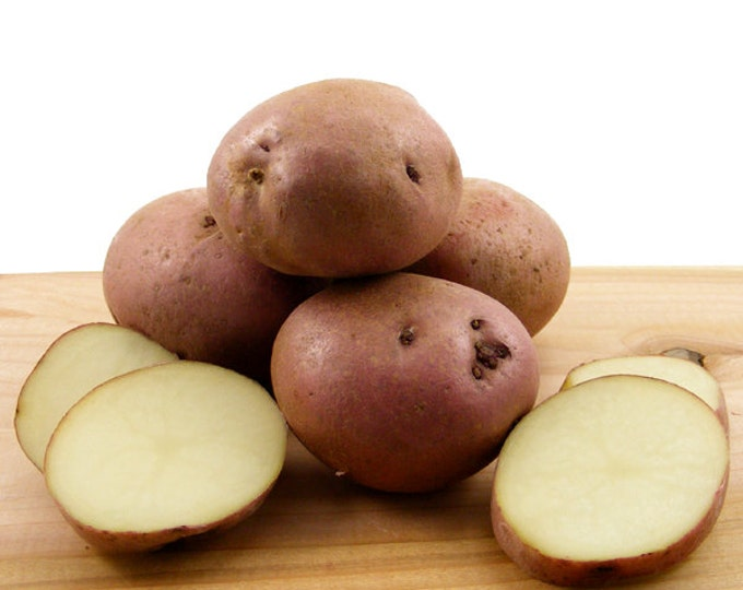 Sangre Seed Potatoes 5 Lbs. Certified Organic Delicious Red Skinned Variety Red Seed Potatoes - Spring Shipping Non-GMO