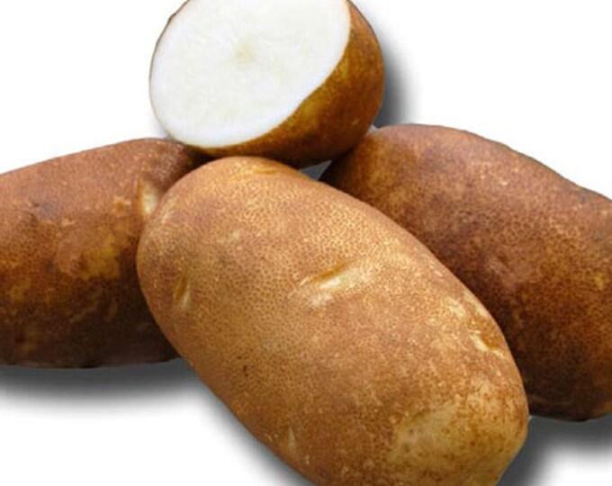 Russet Potato Seed   Rio Grande Seed Potatoes 2.5 Lbs. Certified Organic - Spring Shipping Non-GMO