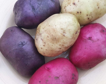 Red White Blue Seed Potatoes Mix 2.5 Lbs. Certified Organic Potato Collection- Spring Shipping Non-GMO