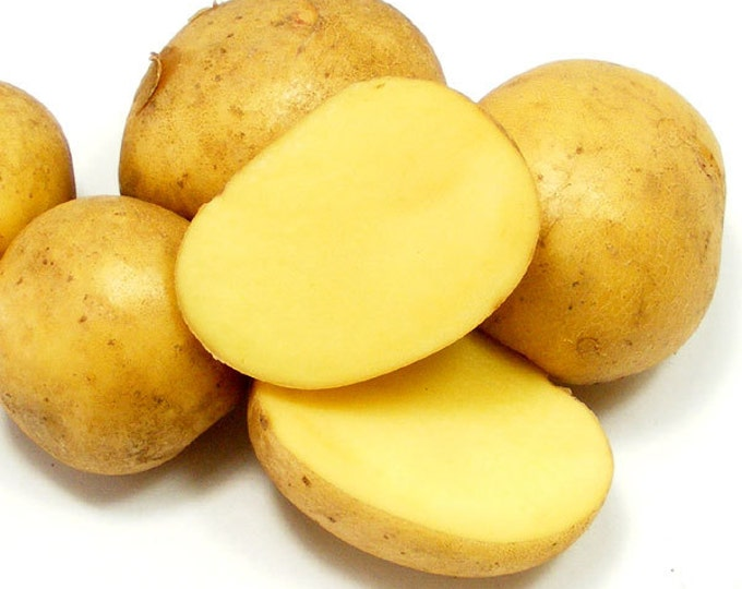 German Butterball Seed Potatoes Certified Organic and Virus Free 2.5 Lbs. Yellow Potatoes - Spring Shipping Non-GMO