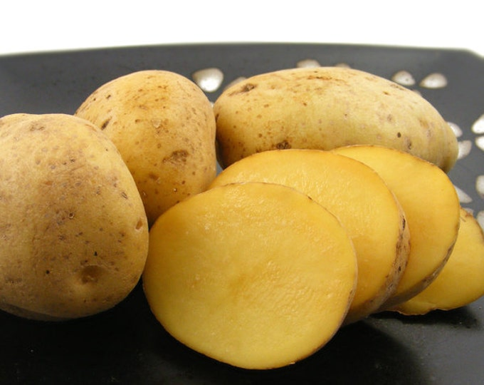 Yukon Gold Seed Potato Certified Organic and Virus Free 2.5 Lbs. Spring Shipping Yellow Potatoes Non-GMO