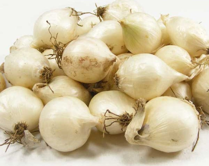 White Onion Sets Organic | White Ebenezer Onion Bulbs 8 oz. Non-GMO  Shipping Now