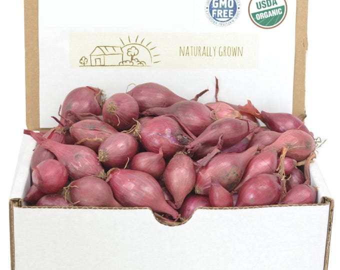 Red Onion Sets Organic | Red Baron Onion Bulbs 1 Pound - Non-GMO Shipping Now