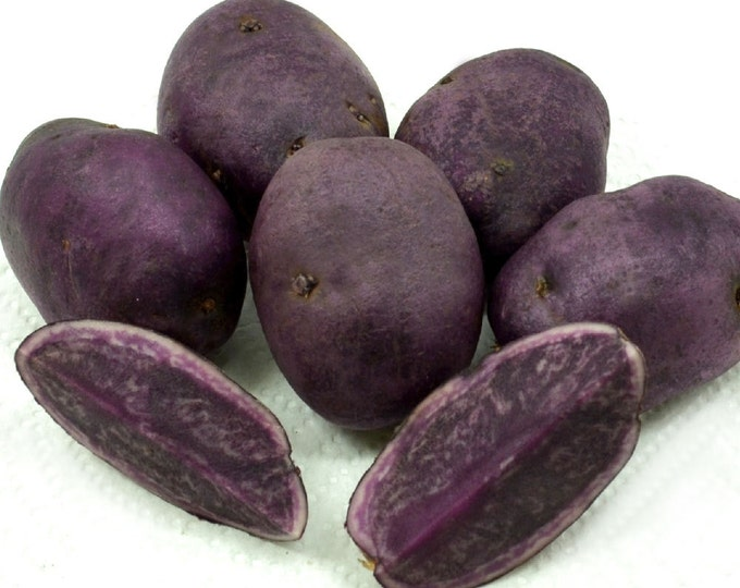 All Blue Seed Potatoes Certified Organic and Virus Free 2.5 Lbs. - Spring Shipping Non-GMO