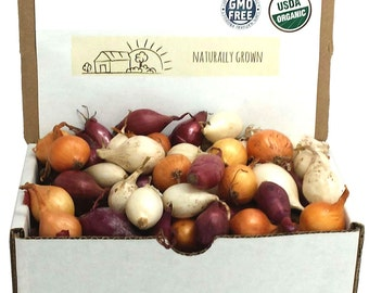 Mixed Red White and Yellow Onion Sets Organic Non-GMO | Onion Bulbs 1 Pound Shipping Now