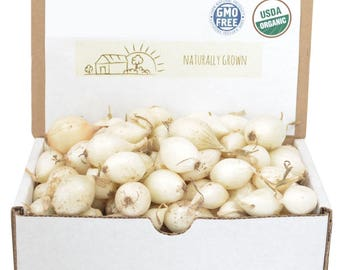 White Onion Sets Organic | Onion Bulbs White Ebenezer Onion 1 Pound Non-GMO SHIPPING NOW