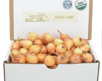 Yellow Onion Sets Organic | Stuttgarter Onion Bulbs 1 Pound - Non-GMO Shipping Now