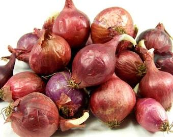 8 oz. Red Onion Sets Organic Grown | Red Baron Onion Bulbs - Non-GMO - FALL SHIPPING