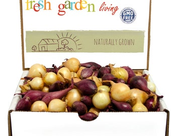 1 Lb. Mixed Red and Yellow Onion Sets Organic Grown Non-GMO | Onion Bulbs - FALL SHIPPING
