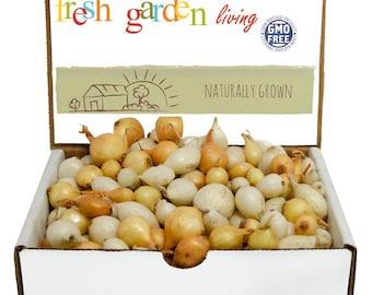1 Lb. Mixed White and Yellow Onion Sets Organic Grown Non-GMO | Onion Bulbs - FALL SHIPPING