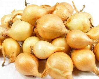 Yellow Onion Sets Organic Grown | Stuttgarter Onion Bulbs  50-60 Bulbs  8 oz. -  FALL SHIPPING