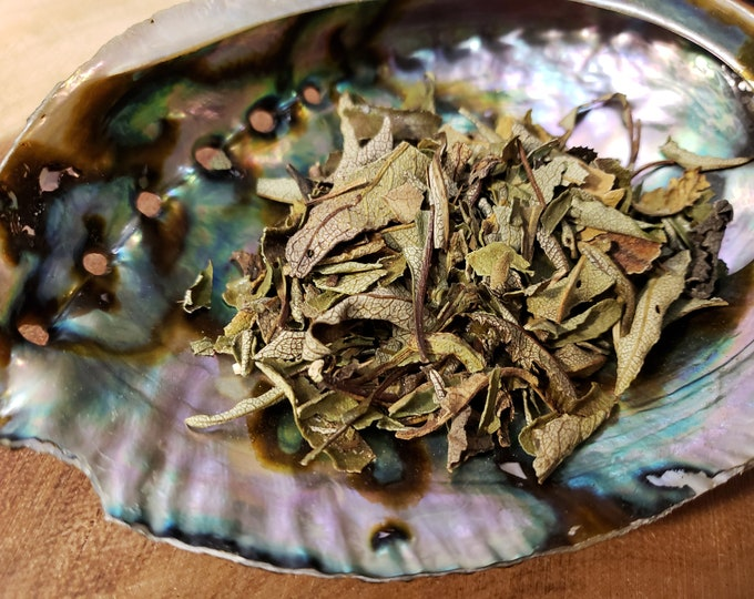 Yerba Santa (Eriodictyon Californicum) aka Holy Herb, Mountain Balm, Consumptive's Weed, Bear Weed ~ 3/4 ounce package, Reiki infused