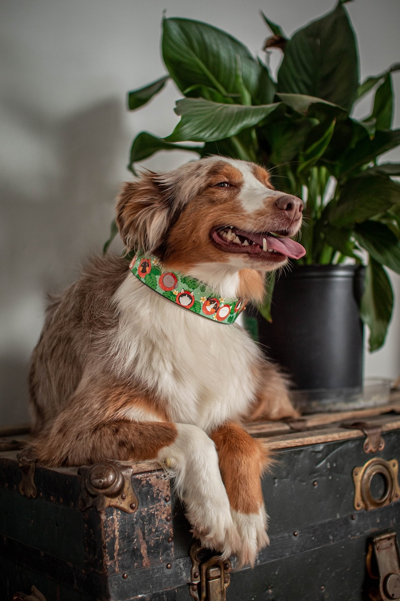 Green Leather Collar Strawberry Collar Fruit Dog Collar MadcoW X Dog Berry Fields Adjustable Leather Collar Rose Gold Hardware