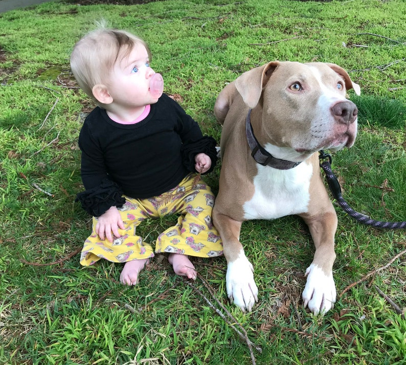 Top Five Pit Bull Rescue - Circus