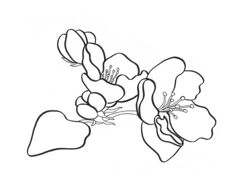 Apple Blossom coloring page image 0