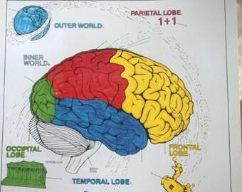 Brain coloring book | Etsy