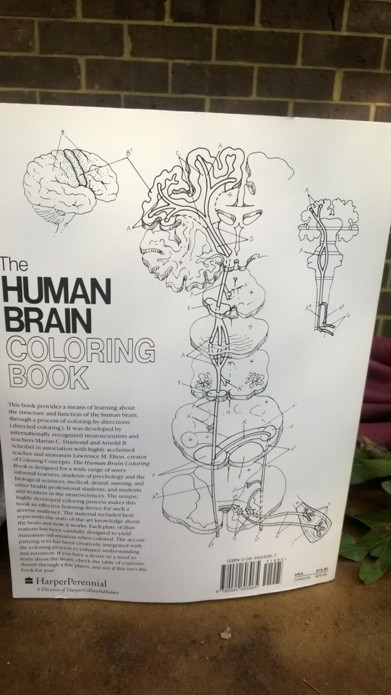 Human Brain Coloring Book new unused softcover book 300 pages of frontal &  media lobes with exacting details