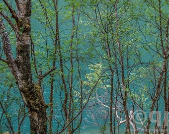 Norway Fjord Turquoise Trees