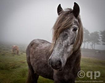 Dartmoor pony and wind swept blonde set 11x14 prints