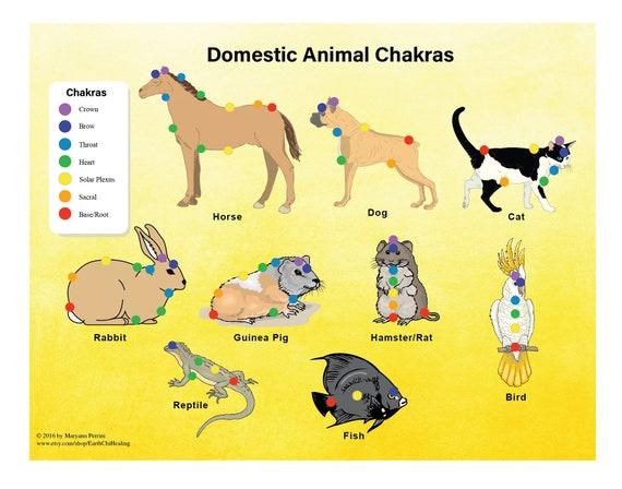 Resultado de imagen de chackras en los animales