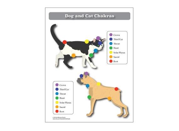 Hund LAMINIERT Katze 7 Chakren Diagramm Poster Tiere Reiki | Etsy