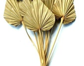 25 x Dried Palm Spear Natural - Exotic Decoration - Fall Decoration - Wreaths - Weddings