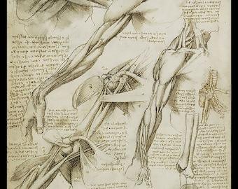 Anatomy - Arm detail - anatomical study - vintage image