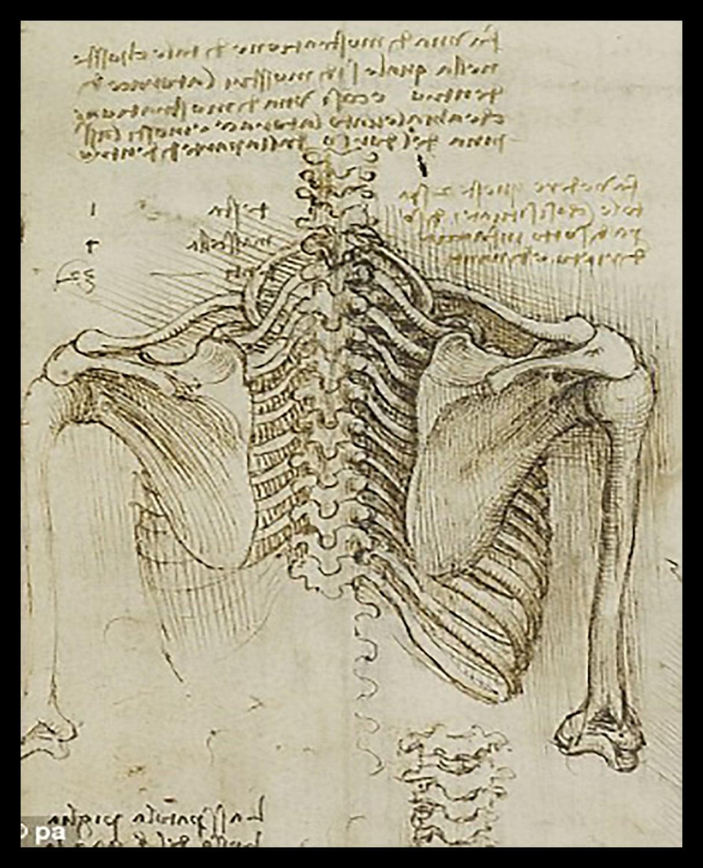 Anatomy Human Back Skeletal Structure