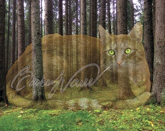 CREATIVE PHOTOS - instant download for high definition printing - illusion - paintings - art