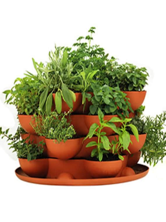 Stack U0026 Grow Planter Plus Culinary Herb Garden Starter Kit