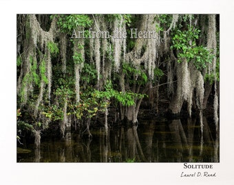 Solitude - the Everglades