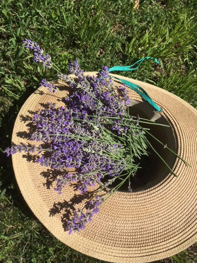 Beautiful vibrant color and highly aromatic lavender image 0