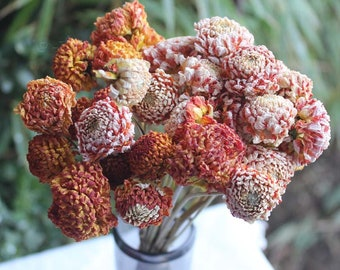 Naturally Dried Dahlia Flowers - Orange Dahlias - Organic Dried Dahlia Bouquets - Fresh Dried Dahlias - Dried Dahlia Blooms - Orange Shades
