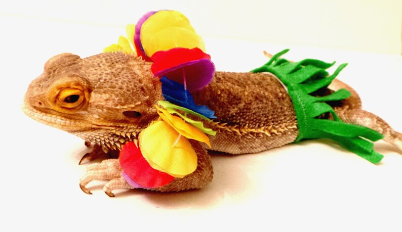 5ab790a5bf9 Bearded Dragon Clothing Hawaiian Luau
