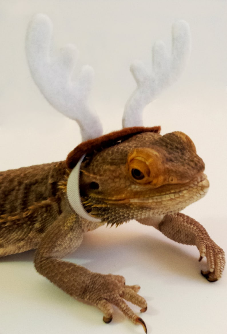 f837cea75e8 Bearded Dragon Clothing Reindeer