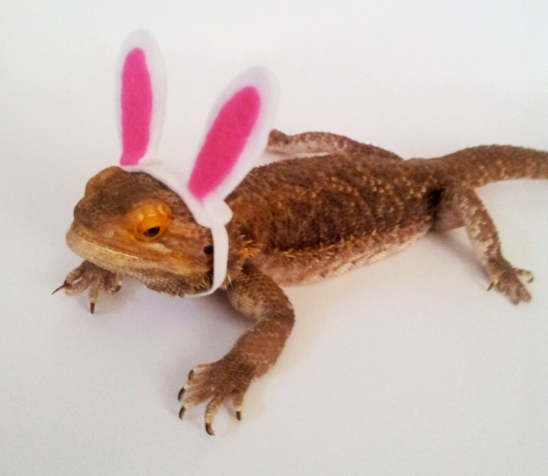 8a62e1a3f70 Bearded Dragon Clothing Easter Bunny