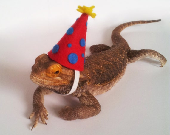 a6457b8fce6 Bearded Dragon Clothing Birthday Celebration