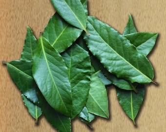 40 Fresh Picked Califorina Bay Leaves for cooking and/or cold congestion