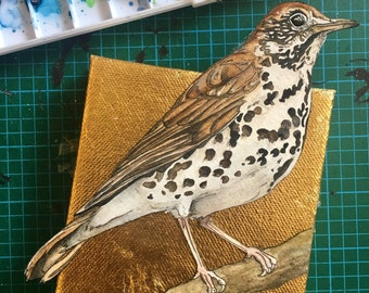 Wood Thrush Painting