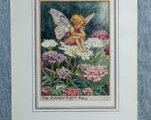 Candytuft Flower Fairy Vi...