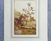 Herb Robert Flower Fairy ...