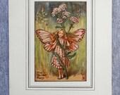 Yarrow Flower Fairy Vinta...