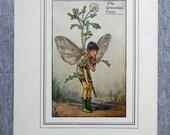 Groundsel Flower Fairy Vi...