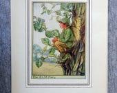 Elm Tree Flower Fairy Vin...