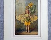 Celandine Flower Fairy Vi...