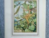 Lime Tree Flower Fairy Vi...