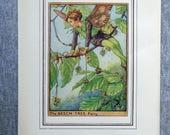 Beech Tree Flower Fairy V...
