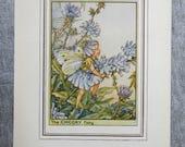 Chicory Flower Fairy Vint...